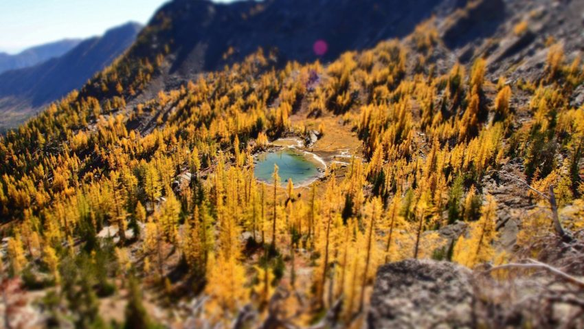 golden larches surround a small blue lake in the mountains